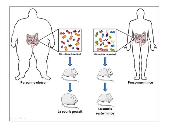 Les probiotiques, bons ou mauvais ?